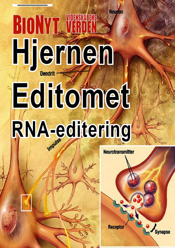 external image http://bionyt.s807.sureserver.com/wp-content/uploads/bionyt170forside.jpg